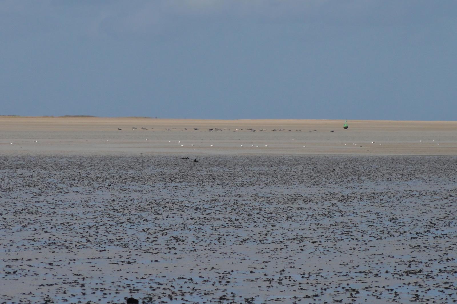 Baie des veys phoques